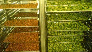 Photo of راهنمای کامل خرید خشک کن میوه