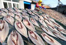 Photo of خشک کردن ماهی و میگو