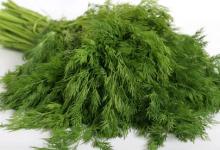 Photo of خشک کن انواع سبزیجات