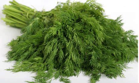 خشک کن انواع سبزیجات