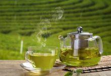 Photo of خشک کن چای سبز و خواص چای سبز