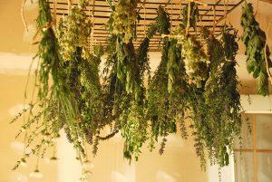 روش بالابردن سرعت خشک میوه و سبزی