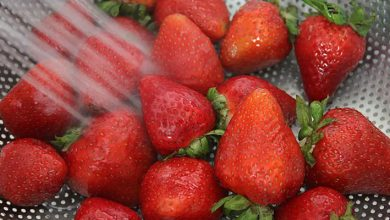 Photo of روش خشک کردن توت فرنگی