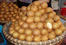 Photo of خشک کن میوه چیکو